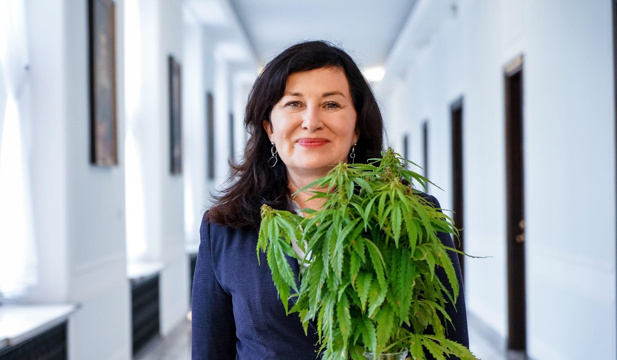 W Sejmie prace nad legalizacją marihuany