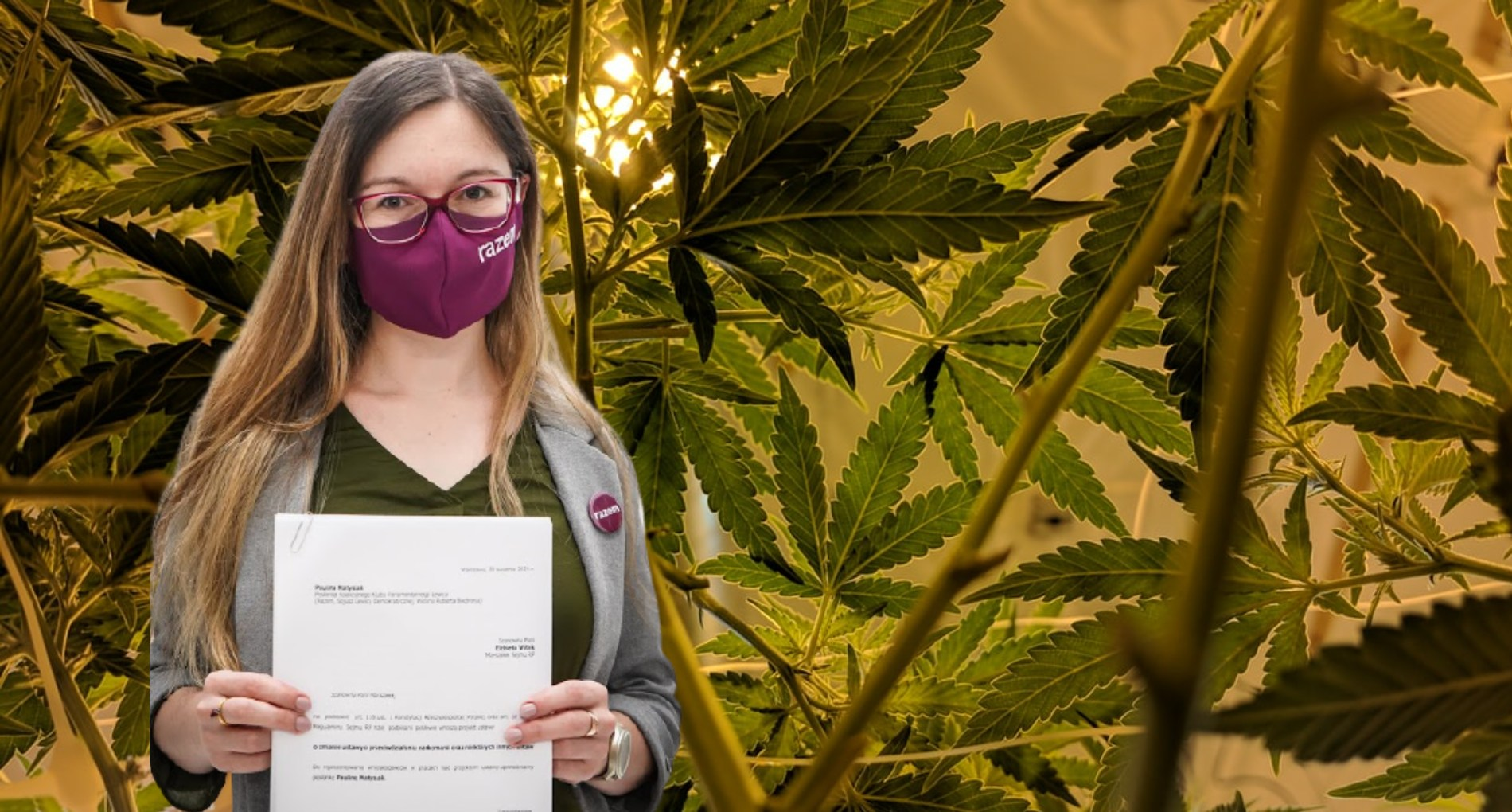 Brak kar zaskręta ilegalna uprawa wdomu.  Projekty ustaw dot. marihuany wSejmie