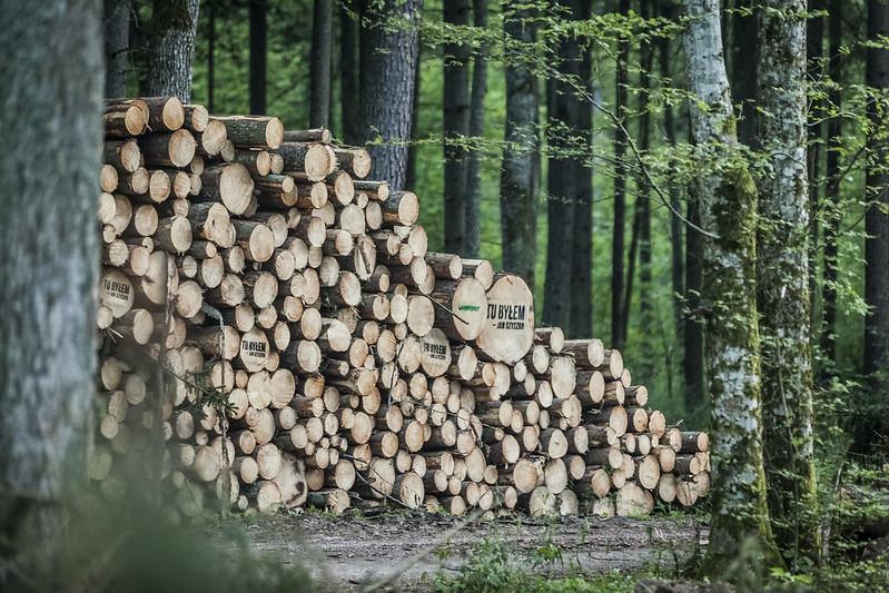 PiS pocichu odda polskie lasy? Projekt już wSejmie