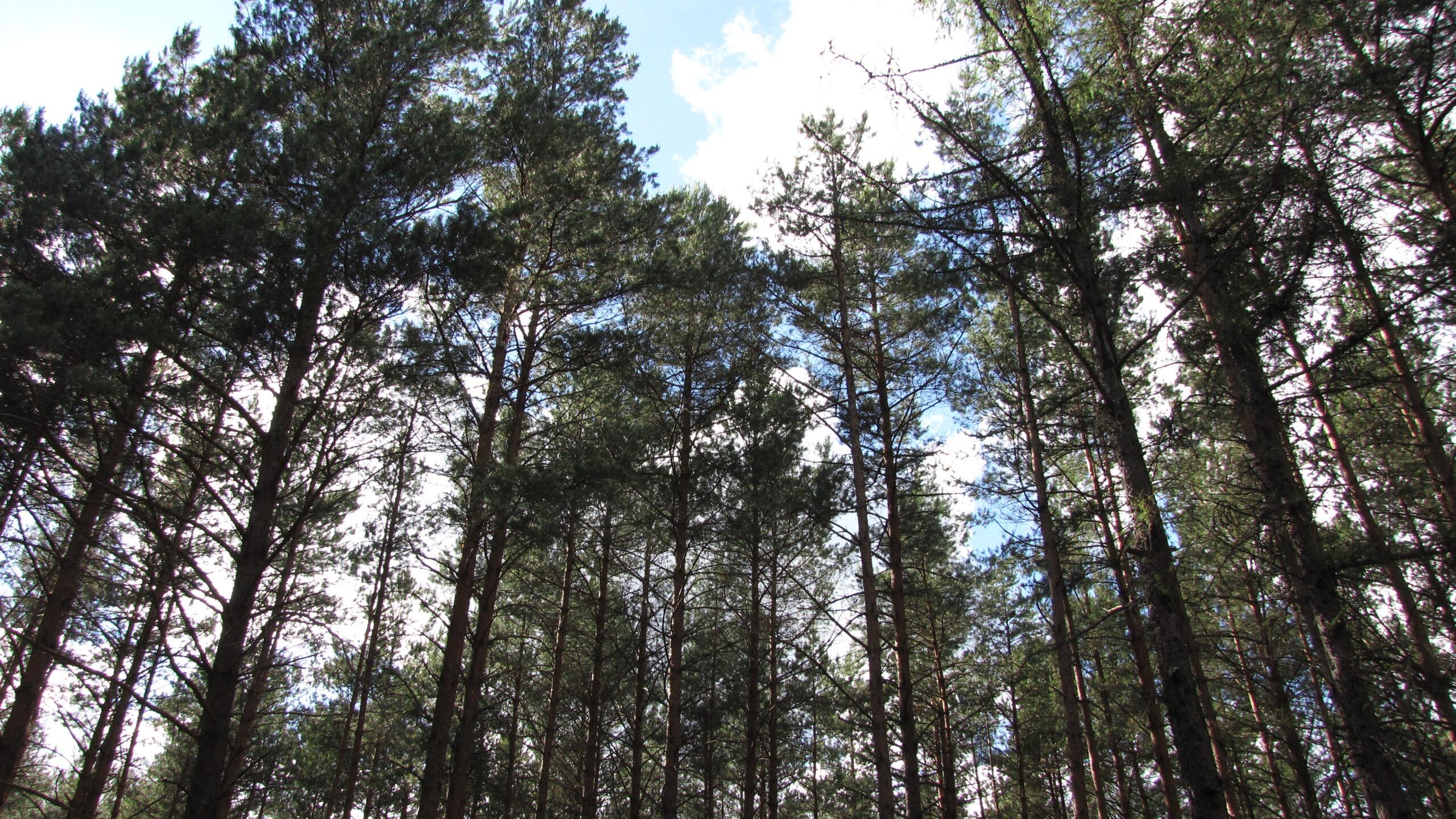 Archidiecezja wycięła las i uruchamia kopalnię obok cmentarza