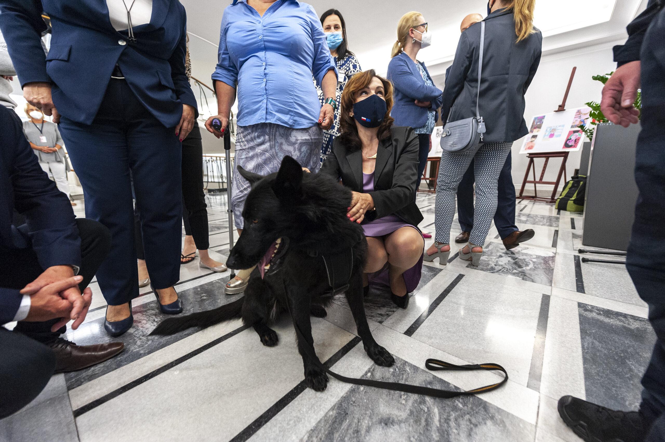 We wtorek w Senacie odbędzie się Kongres Praw Zwierząt